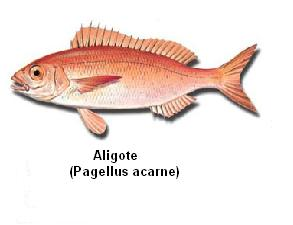 Aligote Image