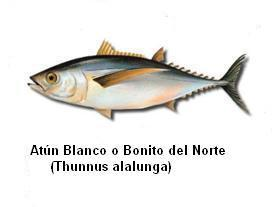 Atún Blanco Image