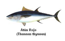 Atún Rojo Image
