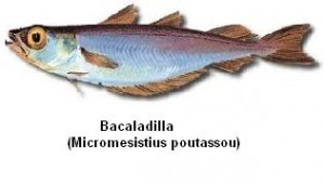 Bacaladilla Image