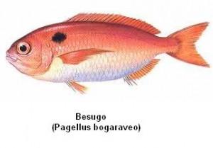 Besugo Image