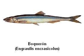 Boquerón Image