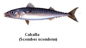 Caballa Image