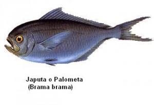 palometa Image