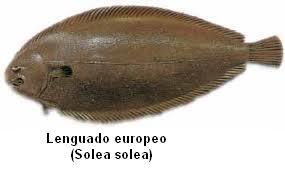 Lenguado europeo Image