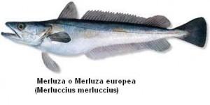 Merluza o merluza europea Image