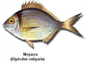 Mojarra Image