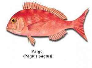 Pargo Image