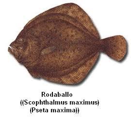 Rodaballo Image