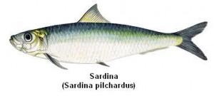 Sardina Image